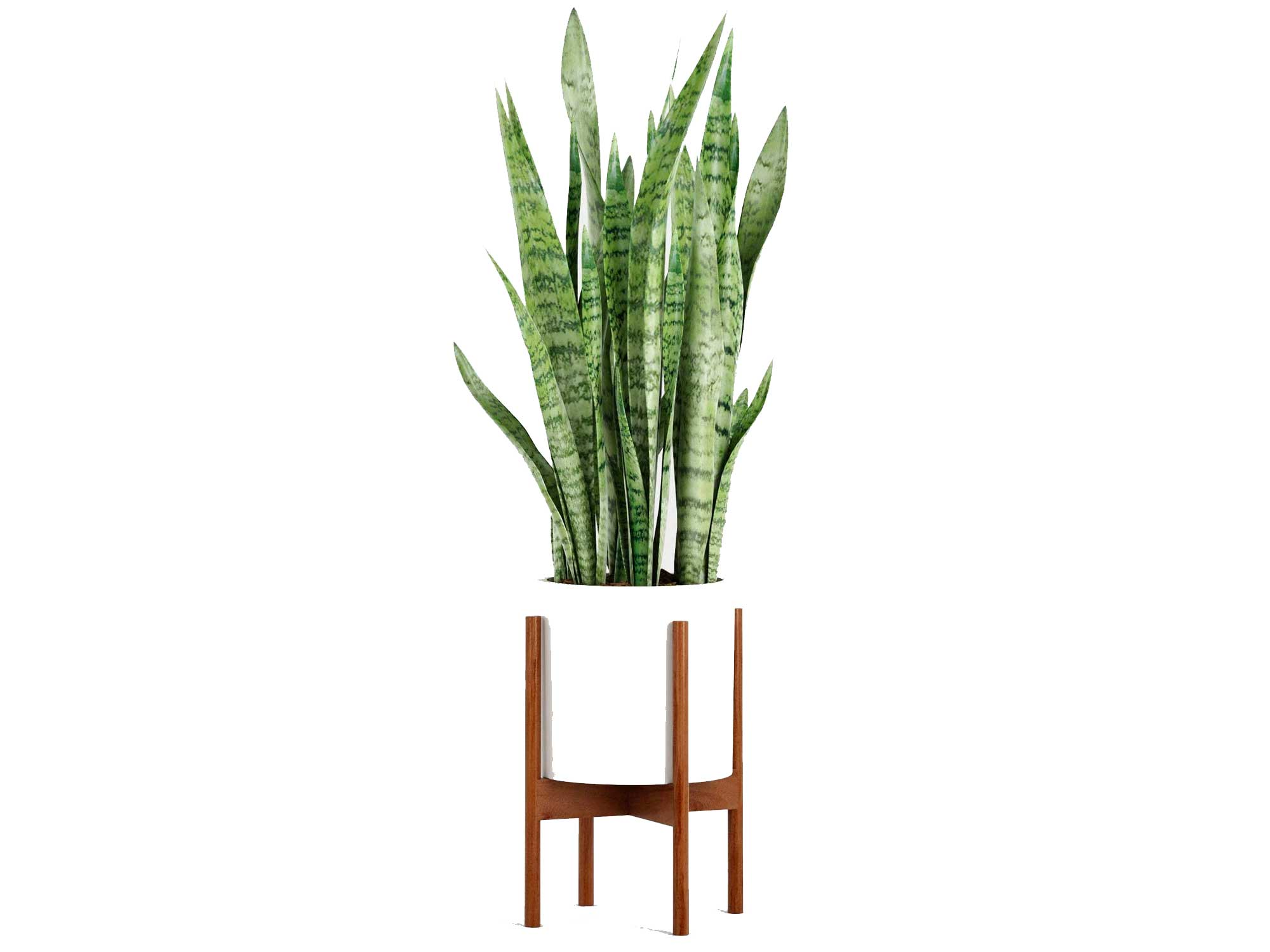 """Fox & Fern Modern Plant Stand with 10"""" Pot - Including White Planter Pot - Drainage Plug - Acacia Wood"""